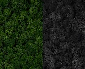 Licheni curatati si fara radacina 500g, 2 culori verde inchis cu gri antracit