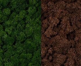 Licheni curatati si fara radacina 500g, 2 culori verde inchis cu maro
