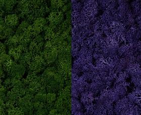 Licheni curatati si fara radacina 500g, 2 culori verde inchis cu mov purpuriu