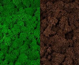Licheni curatati si fara radacina 500g, 2 culori verde intens cu maro