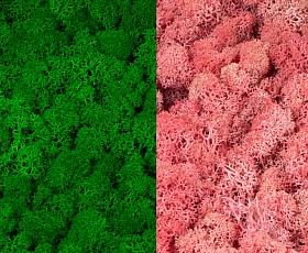 Licheni curatati si fara radacina 500g, 2 culori verde intens cu roz