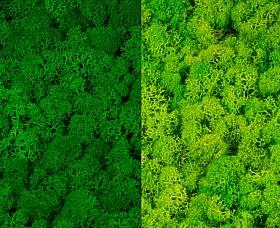 Licheni curatati si fara radacina 500g, 2 culori verde intens cu verde deschis