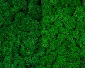 Licheni curatati si fara radacina 500g, 2 culori verde smarald deschis cu verde intens