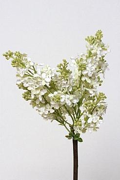 Liliac 80 cm HO alb