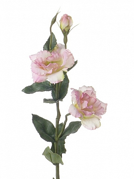 Lisianthus de luxe D8xH65 cm roz