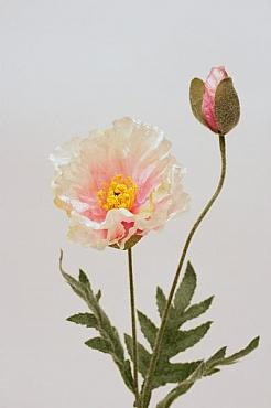 Mac 40 cm HO roz Poppy