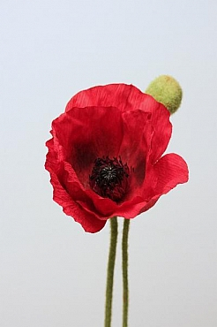 Mac 60 cm HO rosu Poppy
