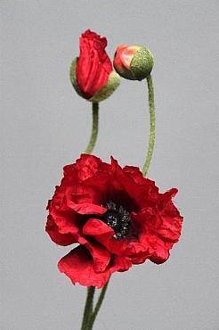 Mac D6xH61 cm HO rosu Poppy
