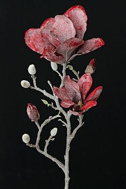 Magnolia 60 cm rosu