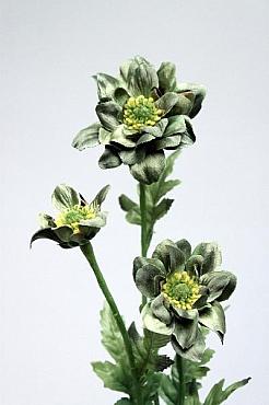Margarete D6xH60 cm HO verde