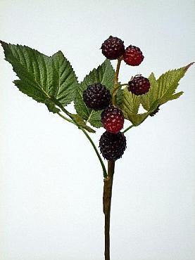 Mure HO Berry