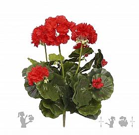 Muscata 30 cm rosu Geranium