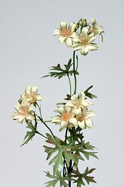 Muscata 65 cm HO galben Geranium