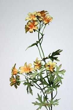 Muscata 65 cm HO portocaliu Geranium