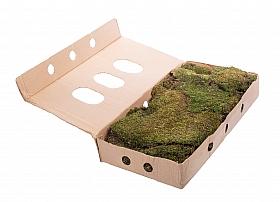 Muschi conservat plat 2 kg (necesar 1,2 kg / mp) calitate II Moss