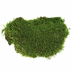 Muschi de padure stabilizat plat 2,5kg - acopera 1 mp verde