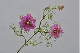 Nigella 61 cm DE roz