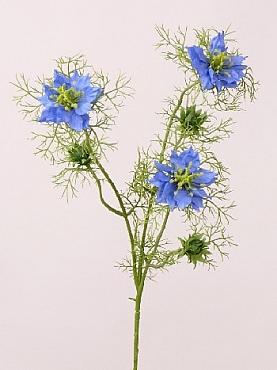 Nigella (Persian Jewel) 61 cm albastru