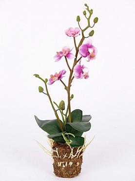 Orhidee 32 cm 27902