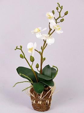 Orhidee 32 cm 27908