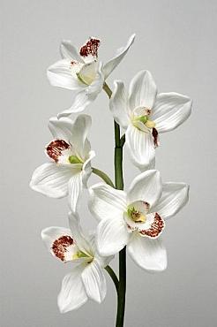Orhidee Cymbidium D12x10xH60 cm HO alb
