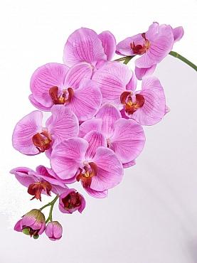 Orhidee Phalaenopsis 101 cm roz