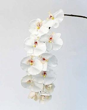 Orhidee Phalaenopsis 102 cm alb Jade Colection