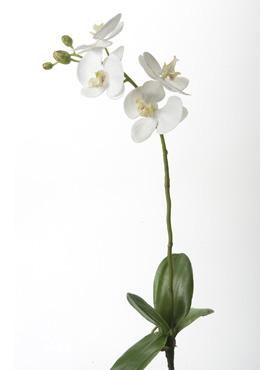 Orhidee Phalaenopsis 60 cm alb