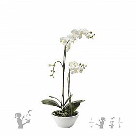 Orhidee Phalaenopsis 70 cm