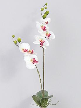 Orhidee Phalaenopsis 75 cm alb WR