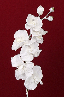 Orhidee Phalaenopsis 76 cm alb