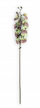 Orhidee Phalaenopsis D10x9x8x5xH80 cm gri