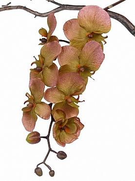Orhidee Phalaenopsis D10x9x8x5xH80 cm maro