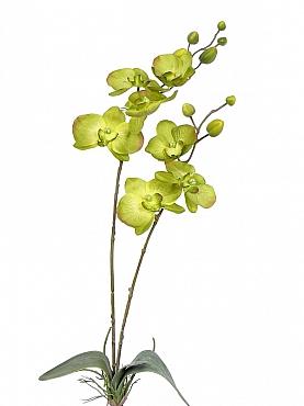 Orhidee Phalaenopsis D10x9x8xH75 cm verde