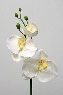 Orhidee Phalaenopsis D11x8x4xH55 cm HO alb