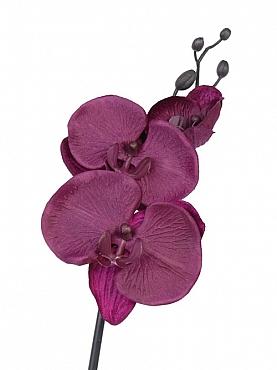 Orhidee Phalaenopsis D11x9x5xH61 cm mov