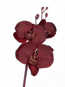 Orhidee Phalaenopsis D11x9x6xH61 cm bordeaux