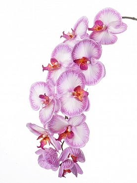 Orhidee Phalaenopsis D12x11x6xH102 cm roz Jade Colection