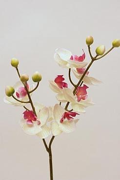 Orhidee Phalaenopsis D6x5xH60 cm HO alb