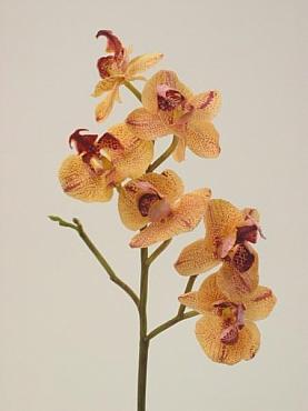 Orhidee Phalaenopsis D6xH50 cm HO galben- piersica