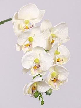 Orhidee Phalaenopsis D7x5xH50 cm alb