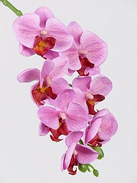Orhidee Phalaenopsis D7x5xH50 cm roz