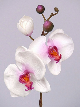 Orhidee Phalaenopsis D8xH33 cm alb