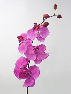 Orhidee Phalaenopsis D9x8xH80 cm HO roz cyclame
