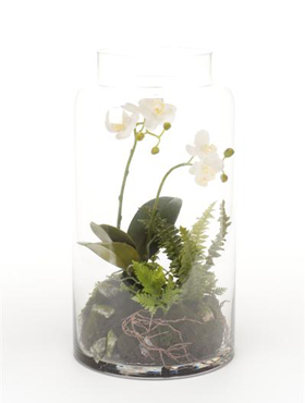 Orhidee Phalaenopsis in vas de sticla 40 cm