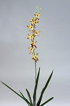 Orhidee Spider 80 cm HO galben