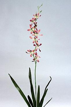 Orhidee Spider 80 cm HO violet