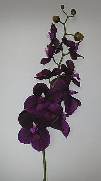 Orhidee Vanda 80 cm HO