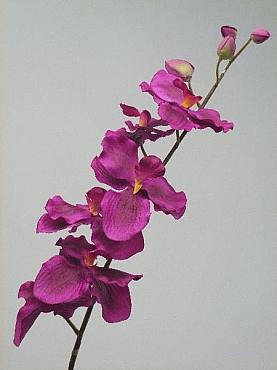 Orhidee Vanda D12x10XH85 cm HO mov