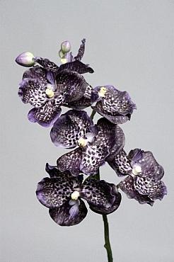 Orhidee Vanda D8x6x4xH45 cm HO mov